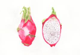 Dragon-Fruit-Illustration-Watercolor
