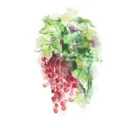 Watercolor -Red currant-