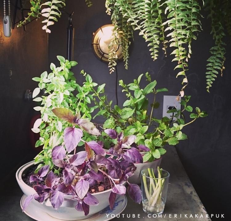 horta no apartamento por erika karpuk